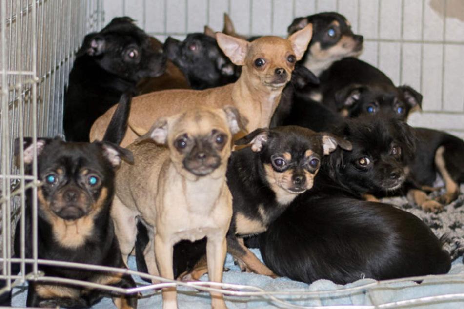 Völlig verstört wurde Rasselbande im Tierheim abgegeben.