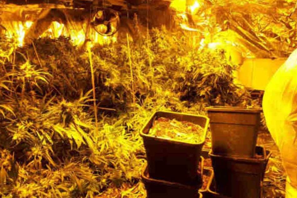 38 Kilogramm Marihuana entdeckten die Beamten im Horror-Haus.