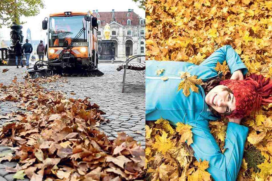 Was passiert eigentlich mit 1200 Tonnen Herbstlaub in Dresden?