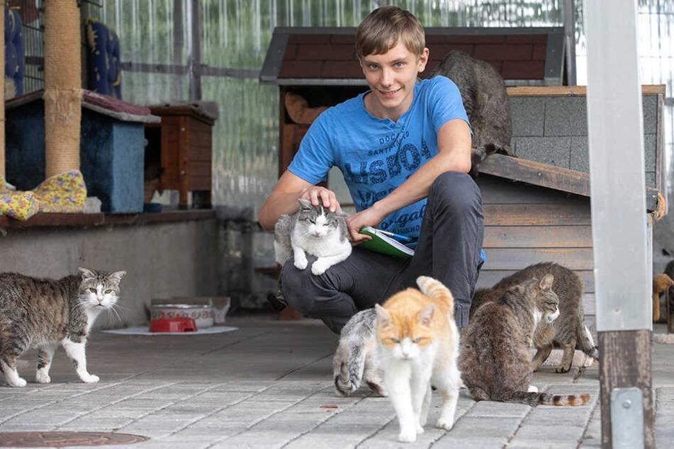 So viele Miezen: Die Katzen haben TAG24-Reporter Richard Assmus in ihren Bann gezogen.