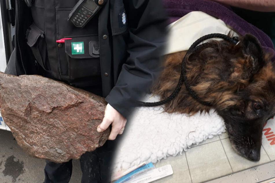 Hund mit Felsbrocken um den Hals von Frau in Fluss geworfen