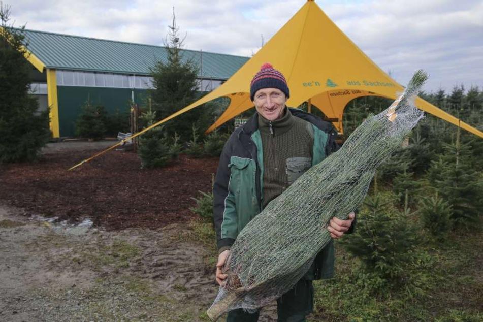 Baum-Experte Ulrich Kleinstäuber (47) weiß, wie der richtige Weihnachtsbaum aussieht.