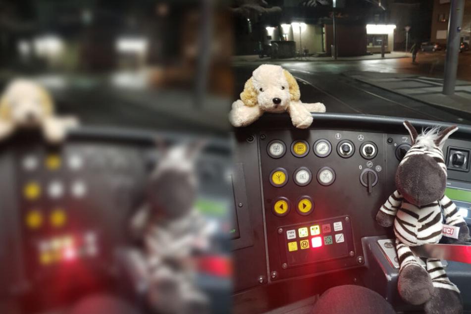 Hund und Zebra auf Reise: Mit diesem Foto beweist ein Bahnfahrer Herz!