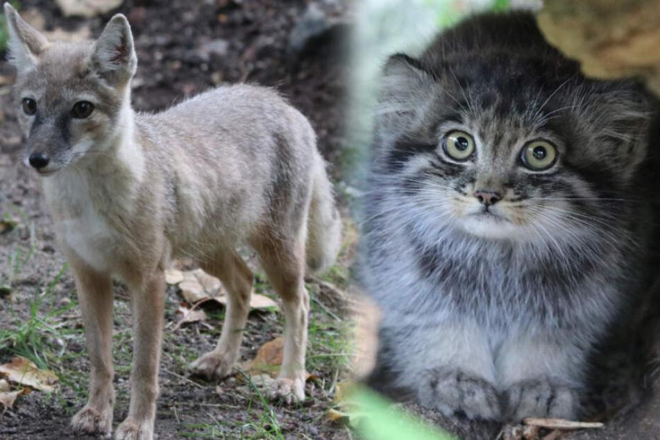 Wie süüüß! Chemnitzer Tierpark freut sich über diesen Nachwuchs
