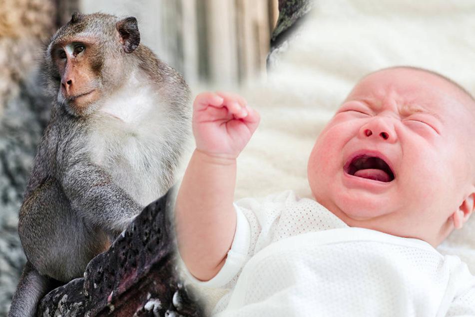 """Ein Affe soll in Indien jetzt ein Baby """"geklaut"""" haben."""