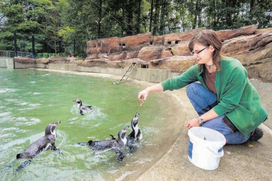 Nach Mysteriöser Todesserie Limbacher Zoo Versucht Es Nochmal Mit