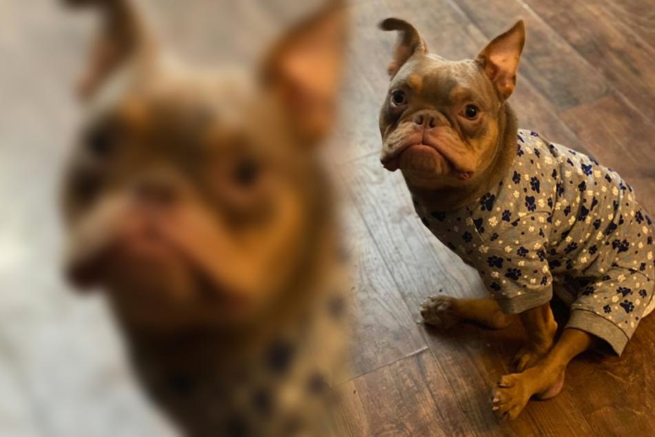 Hundewelpe mit Geburtsfehler wartet auf neues Herrchen, doch das lässt ihn eiskalt stehen