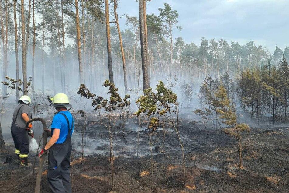 Die Kameraden der Feuerwehr versuchten den Brand unter Kontrolle zu bekommen.