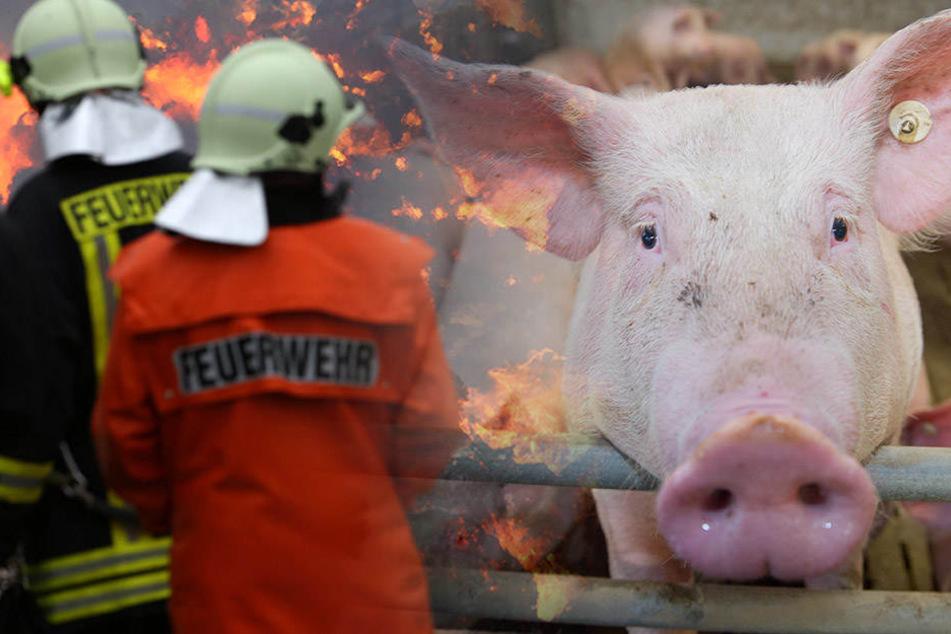 Einige Tiere konnte aus dem Feuer gerettet werden. Für unzählige Artgenossen kam jedoch jede Hilfe zu spät. (Bildmontage)
