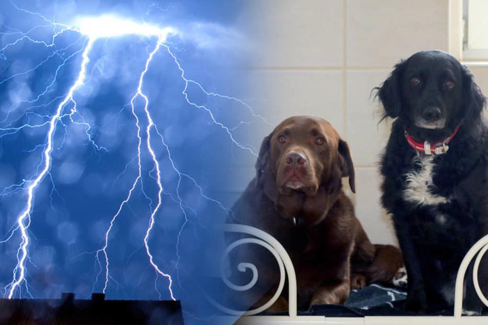 Zwei der Tiere konnten nicht mehr rechtzeitig befreit werden (Symbolbild).
