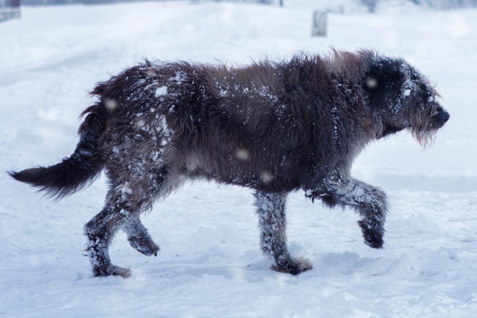 Mutierte Hunde? Seltsame Tiere in stillgelegter Fabrik entdeckt