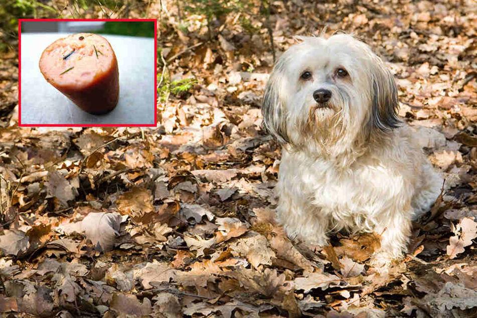 Ein Hundebesitzer konnte gerade noch verhindern, dass sein Hund so einen Köder fraß.