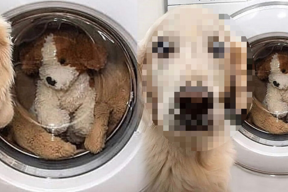 Dog has priceless reaction to seeing his favorite toy in the washing machine