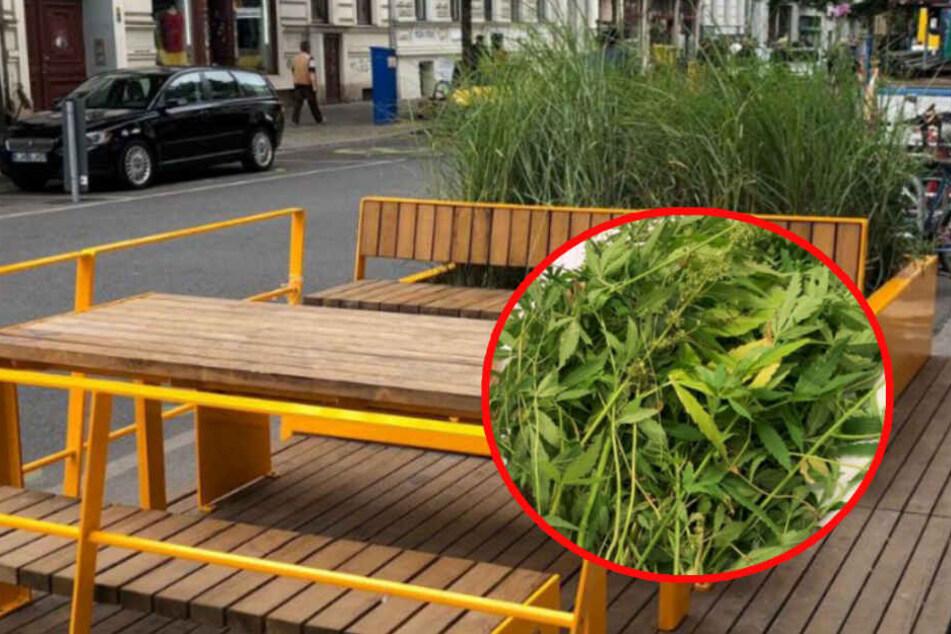 Schräger urbaner Gartenbau im Hipster-Kiez: Polizei erntet Hanfgarten ab