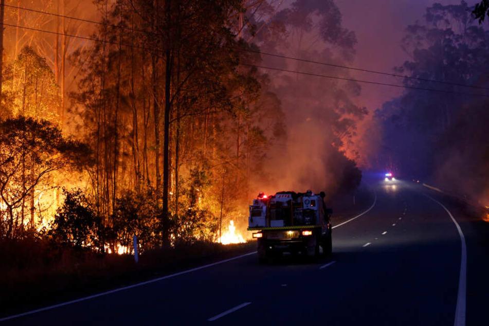 Feuer brennen in einem Waldgebiet am Pacific Highway, auf dem ein Einsatzfahrzeug der Feuerwehr steht.