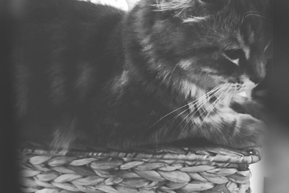 Die Katze Ginger wurde erstochen und vom Balkon geworfen.