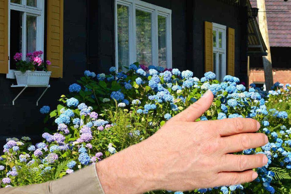Eine junge Arnsteinerin wurde in ihrem eigenen Garten sexuell belästigt (Symbolbild).