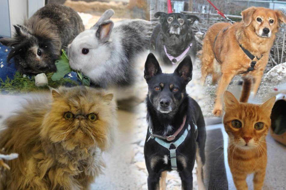 Hunde, Katzen und Kaninchen: Diese Tiere haben viel erlebt