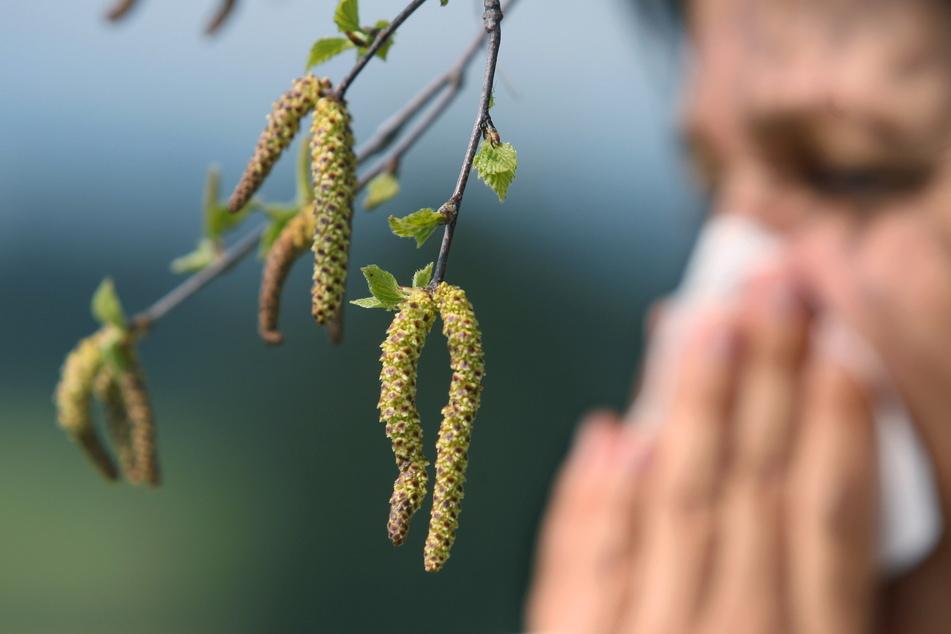 Wer gegen Birkenpollen allergisch ist, kann bei dem winterlichen Schmuddelwetter aufatmen.