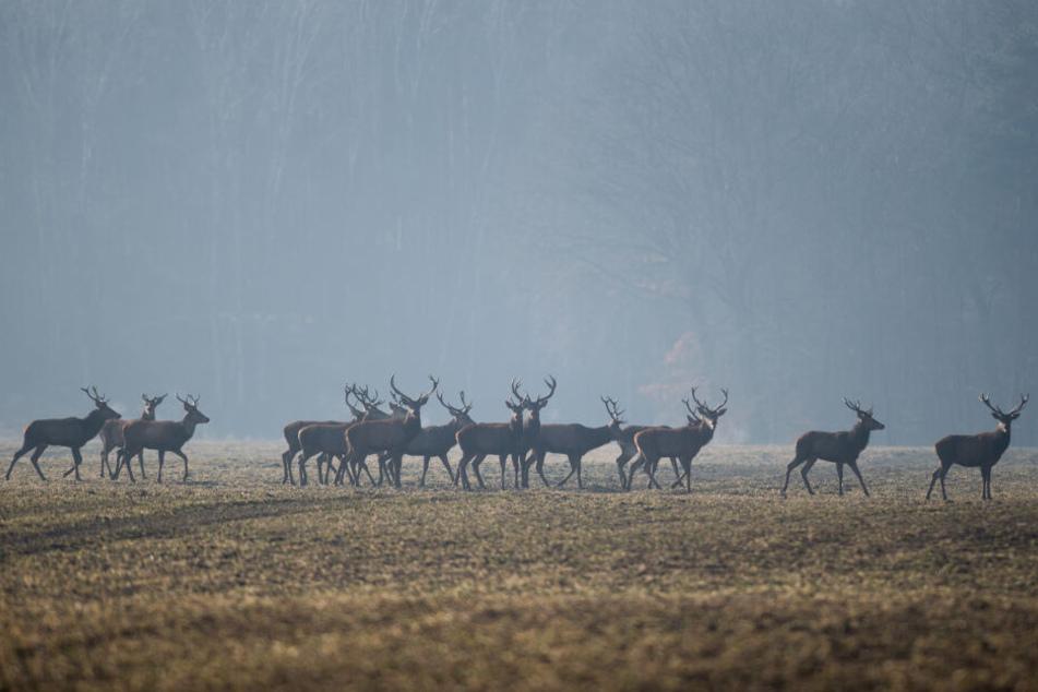 Bis heute wurden mehr als 70.000 Tiere untersucht.