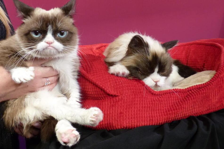 """2015 erhielt """"Grumpy Cat"""" sogar eine Nachbildung aus Wachs."""