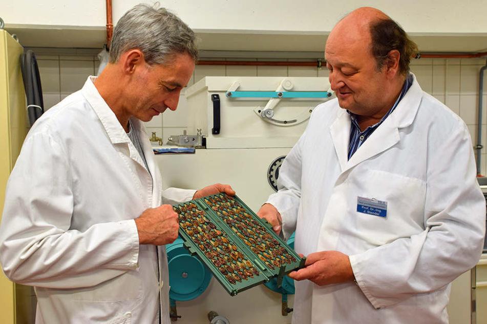 Professor Jörg Stender (rechts) und Industriemeister Axel Piepke von der Hochschule OWL prüfen den Fermentationsgrad von Kakaobohnen.