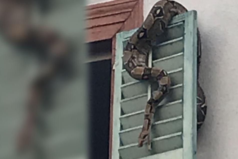 Ein Passant entdeckte die Python in Bamberg und alarmierte die Polizei.