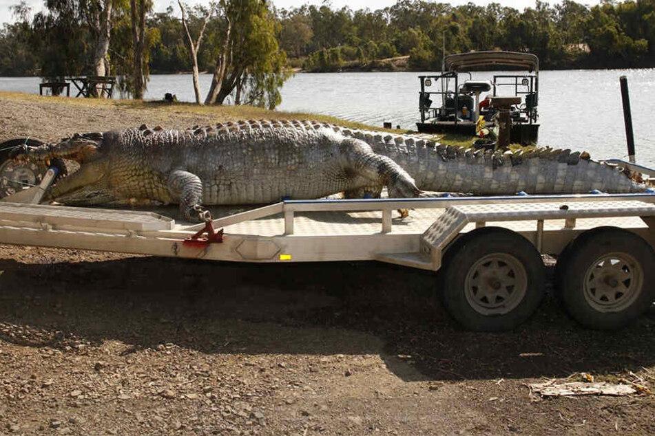 Das 5,2 Meter lange Reptil wurde erschossen aufgefunden.
