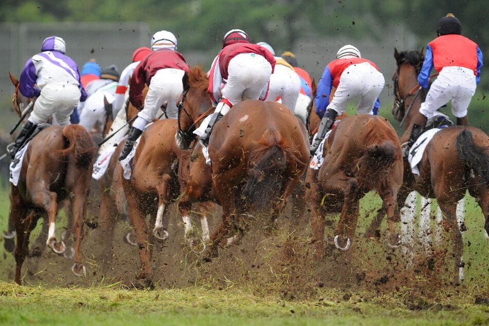 Verdächtiges Futter beim Deutschen Derby: Mehrere Pferde disqualifiziert