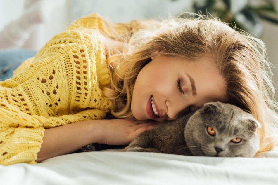 Die Katze im eigenen Bett: Wie gefährlich ist das wirklich?