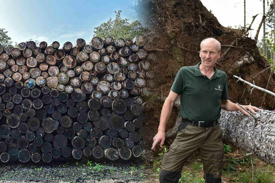 Sturmbruch, Borkenkäfer und Trockenheit! Heide-Bäume werden als Brennholz verramscht