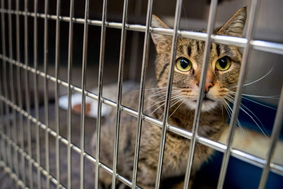 Eine ausgesetzte Katze sucht ein neues Zuhause.