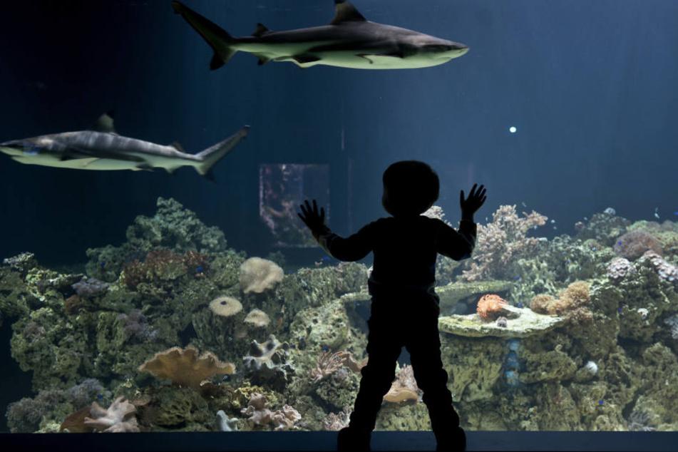 Der Plan des Hai-Aquariums in Pfungstadt hat viele Gegner.