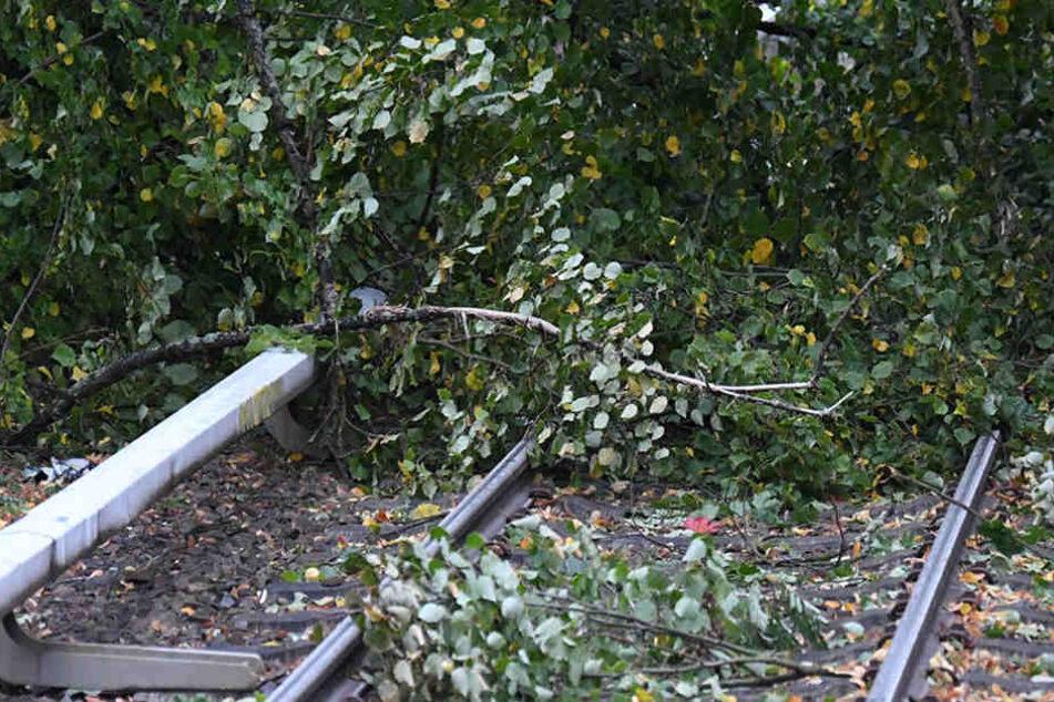 """Durch den Sturm """"Herwart"""" drohen weiterhin Bäume auf Gleise zu fallen. (Symbolbild)"""