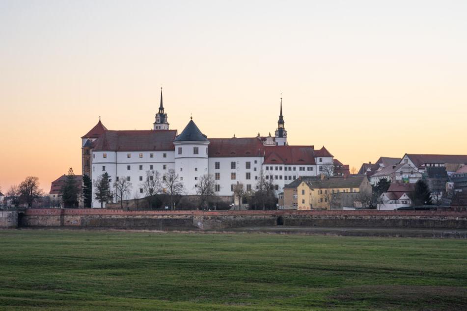 Im Schatten von Schloss Hartenfels: Hier sind die Torgauer Bären zu Hause.