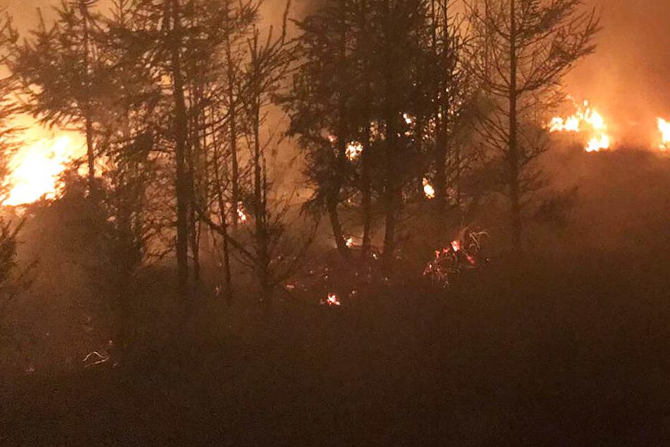 Großbrand in Hessen: Sieben Hektar Wald in Flammen