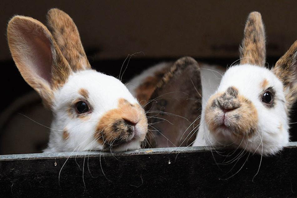 Warum mussten drei Kaninchen sterben? Hat der Hundebesitzer sein Tier aus den Augen verloren? (Symbolbild)