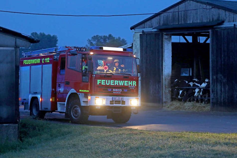 Die Feuerwehr ist an einem Rinderstall in Schönberg im Einsatz.