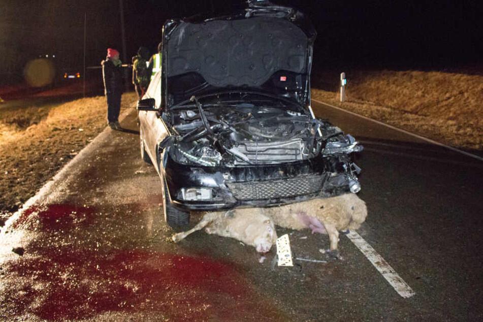 Eine Schafherde war ausgebrochen und auf die Straße gelaufen.