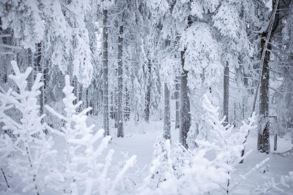 Voraussichtlich wird nur in höheren Lagen in NRW Schnee fallen und liegen bleiben. (Symbolbild)