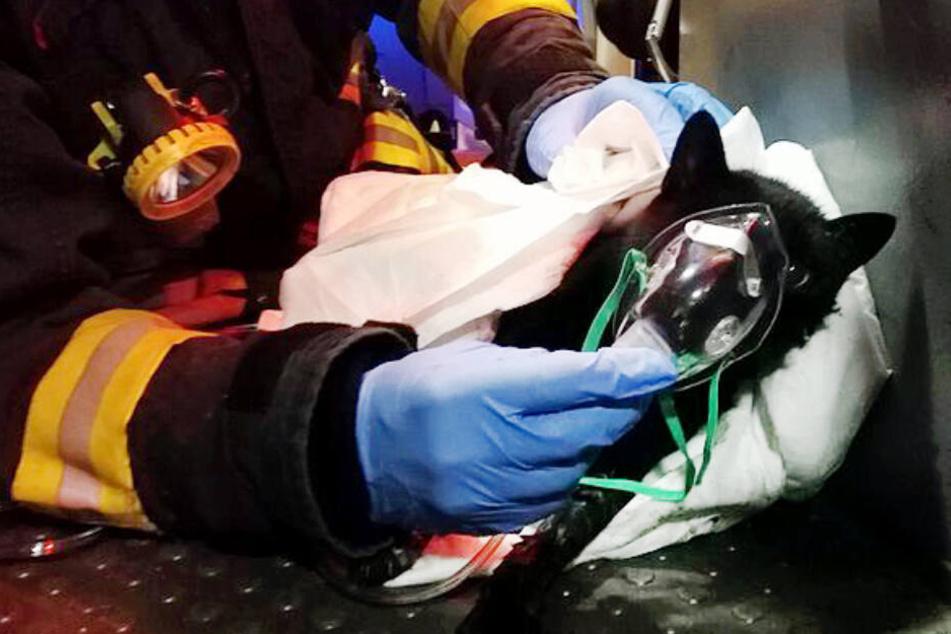 Notfallsanitäter dürfen ohne Rücksprache mit einem Arzt nicht eigenverantwortlich heilkundlich tätig werden. (Symbolbild)