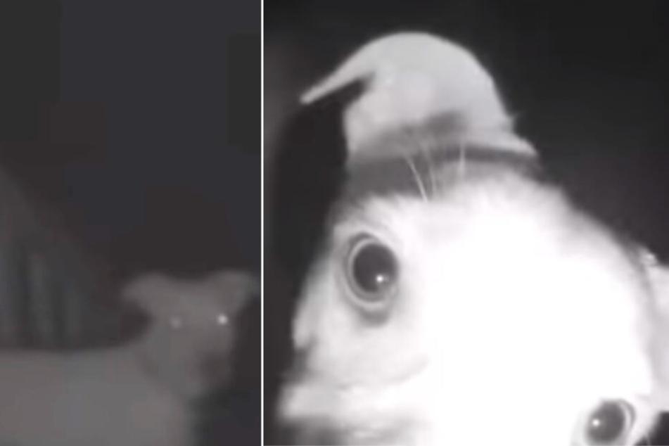 Böses Erwachen! Familie sperrt ihren Hund aus, nachts klingelt es an der Tür