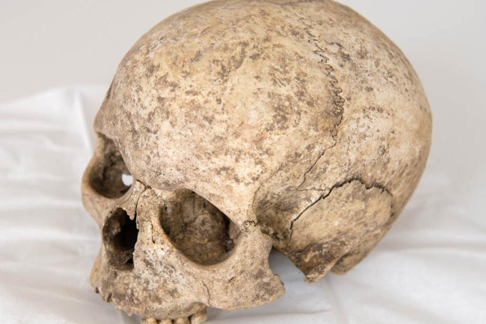 Gruselig: Bremer Museum will menschliche Schädel zurückgeben