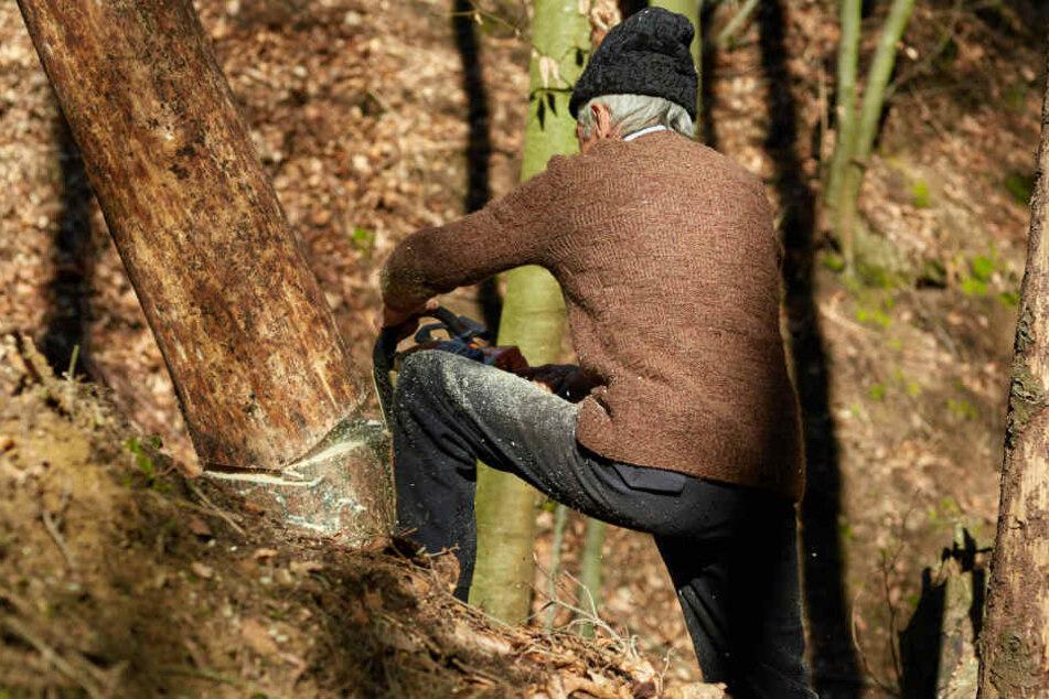 Der Mann war von herabfallenden Holz getroffen worden. (Symbolbild)