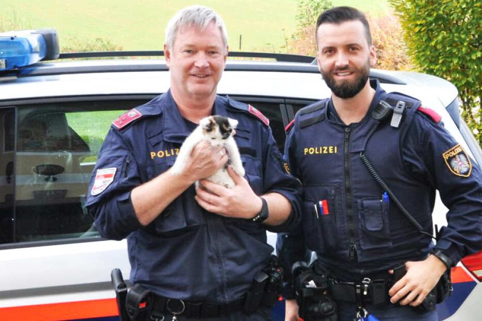 Katze will Polizei spielen und begibt sich dabei mehrfach in Lebensgefahr