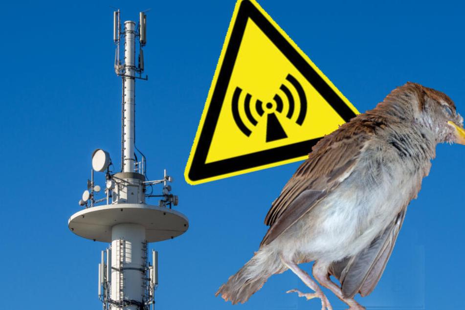 Gefährlicher Elektrosmog? 100 Vögel fallen tot vom Himmel!