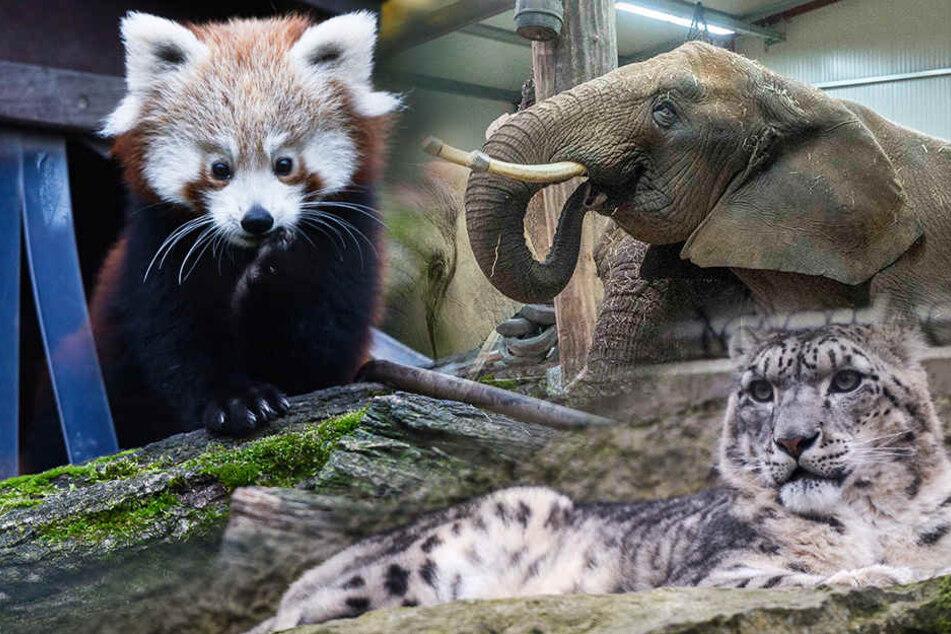 Was machen eigentlich die Dresdner Zoo-Tiere im Winter?