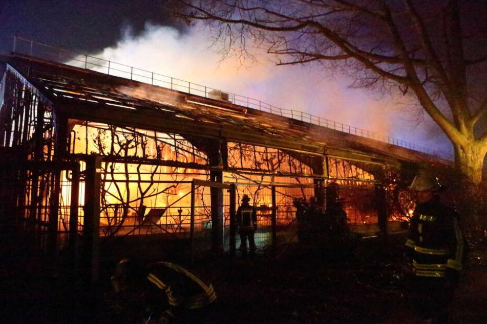 Das Affenhaus im Zoo Krefeld wurde bei dem Feuer komplett zerstört, rund 50 Tiere starben.
