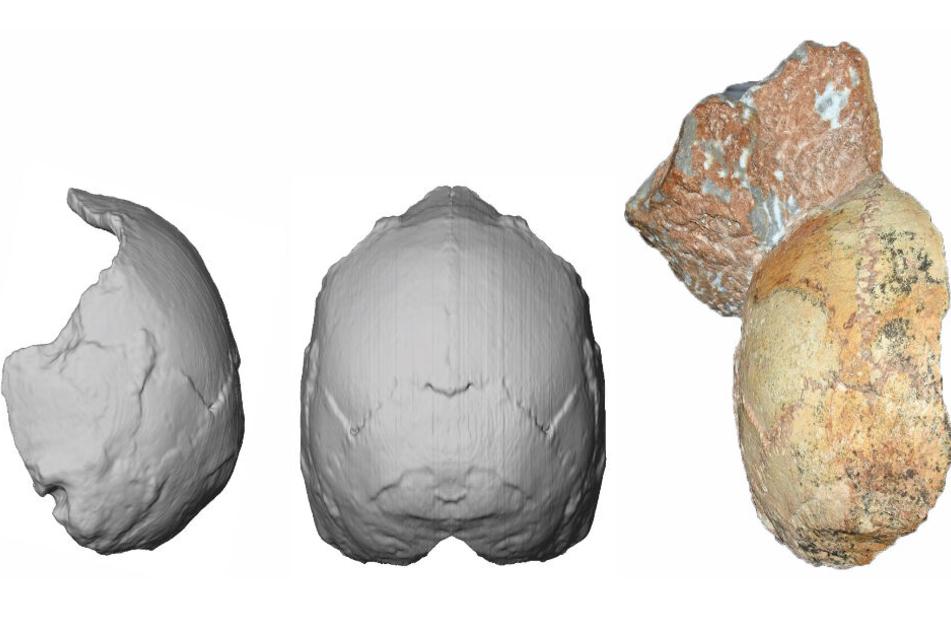 Der Apidima 1-Teilschädel (rechts im Bild) und seine Rekonstruktion von hinten (Mitte) und von der Seite (links). Die abgerundete Form des Apidima 1-Schädels ist ein einzigartiges Merkmal des modernen Menschen und steht in scharfem Kontrast zu den Neander