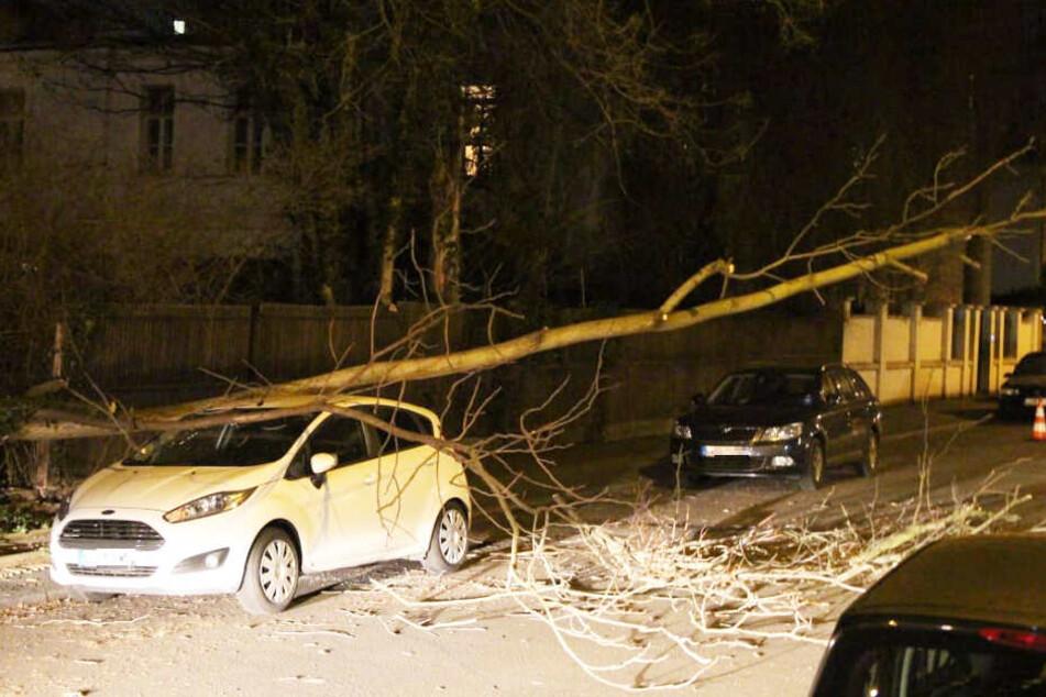 Da war's passiert: Der Baum kippte in der Blumenstraße auf die falsche Seite und krachte auf einen Ford Fiesta.